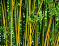 Bamboo Pellet Plant